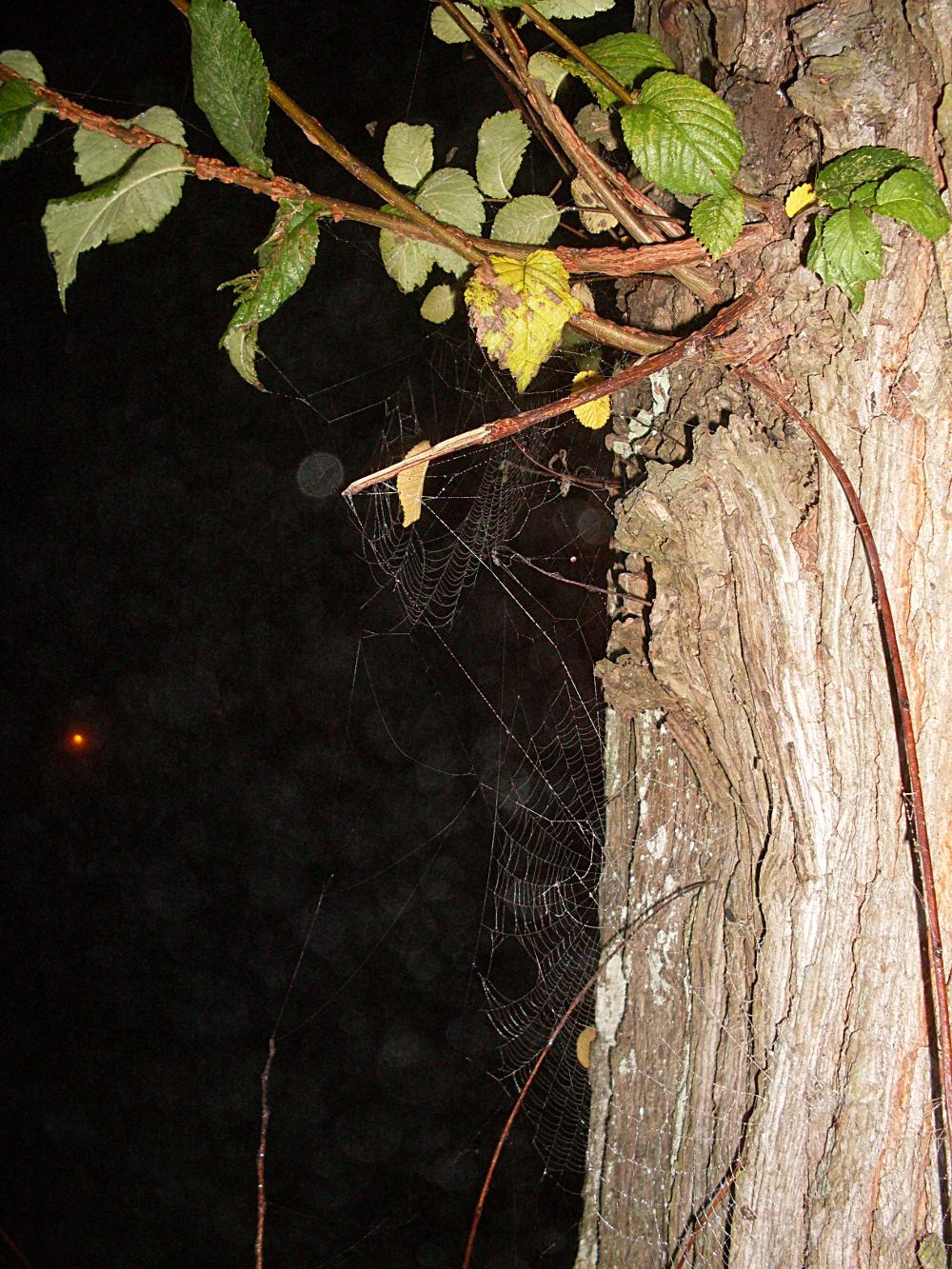 spider webs glowing in the fog sqwabb. Black Bedroom Furniture Sets. Home Design Ideas