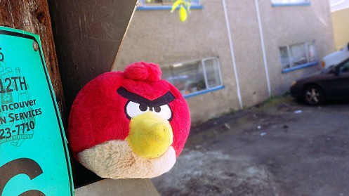 angry-looking-bird-02