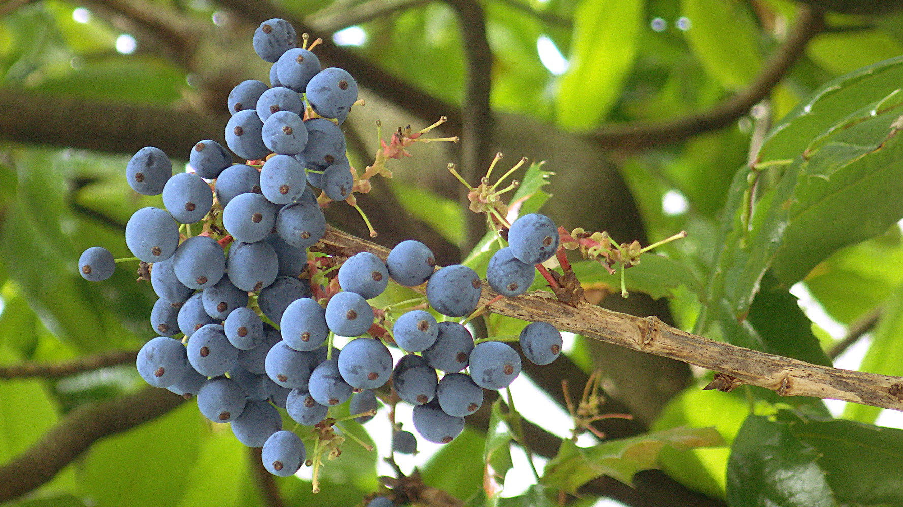 These Sour Grapes May Be Strong Medicine Sqwabb