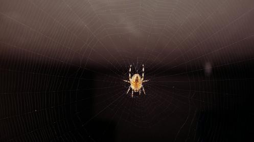 patient-spider-01