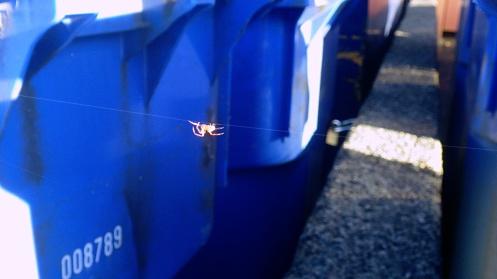 spider-trap-line-01