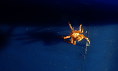 spider-trap-line-02