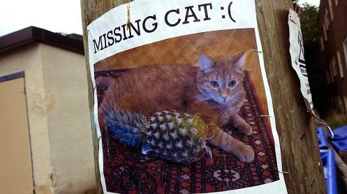 cat-poster-01