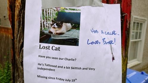 cat-poster-02