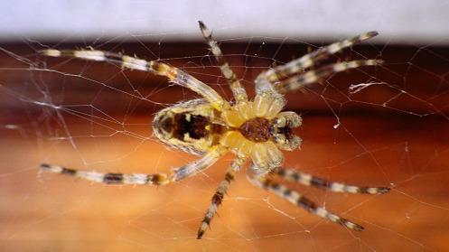 euro-spider-underside-02