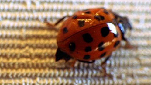 ladybug-02