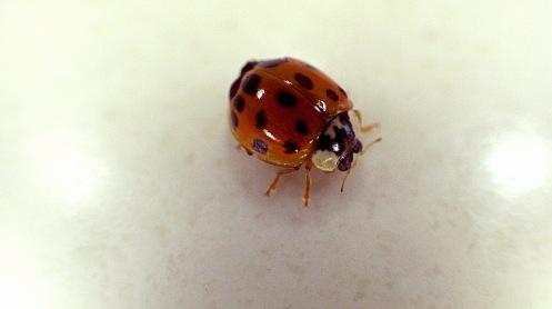 ladybug-08-05-01
