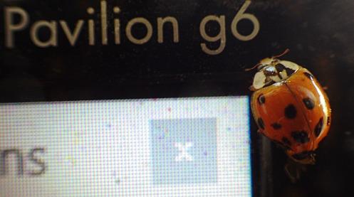 ladybug-0n-laptop-05