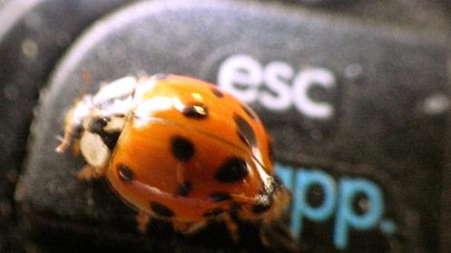 ladybug-on-laptop-02