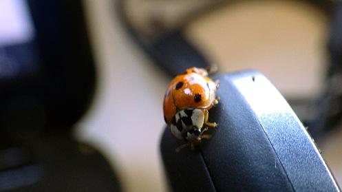 ladybug-on-laptop-03