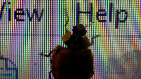 ladybug-on-laptop-05