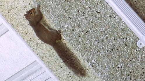 squirrel-on-stucco-01