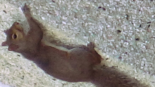 squirrel-on-stucco-02