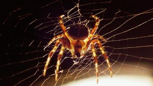 spider-light-01