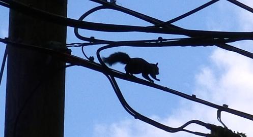 squirrel-0n-wire