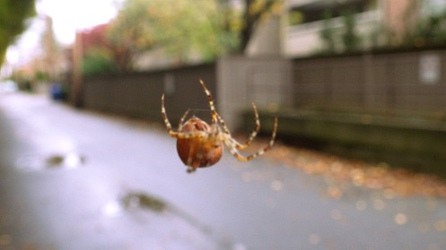 spider-in-the-alley