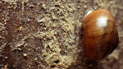 dumpster-snail-04