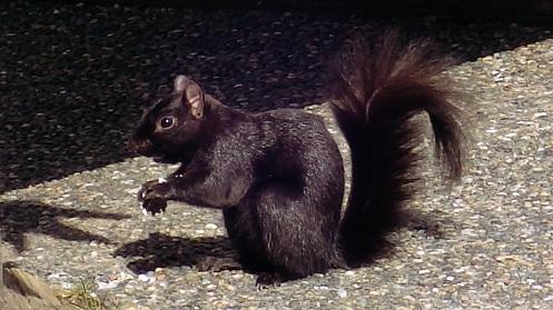 aquirrel-not-enough-nuts-yet-02