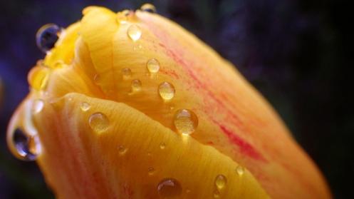 beaded-tulip-01