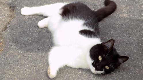 poppy-the-cat-04