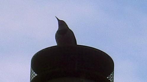 woodpecker-03