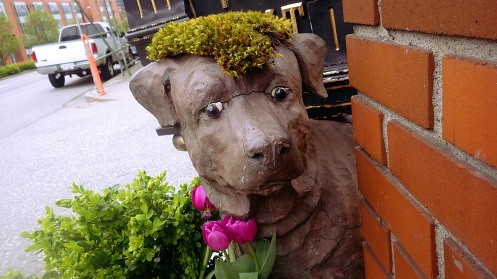 doggone-weird