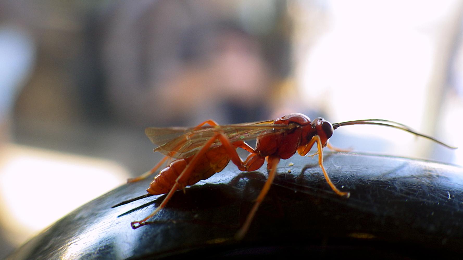 The wasp pics 36