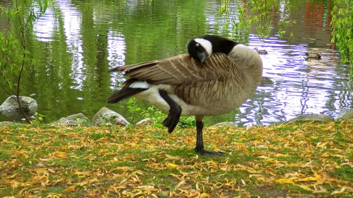 canada-goose-cleaning-01