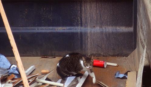 dumpster-cat-01