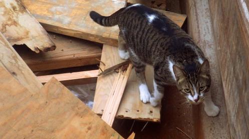 dumpster-cat-02