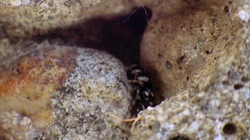 hot-zebra-spider-02