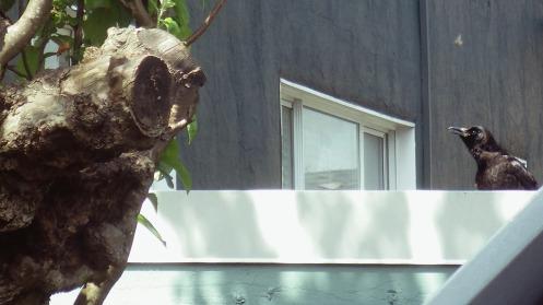 knot-an-owl-02