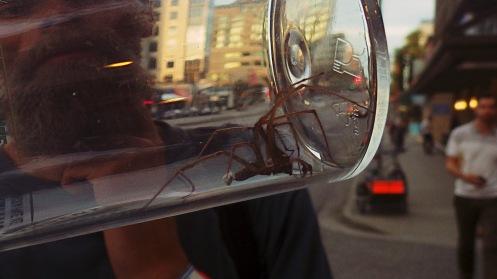 huge-spider-01