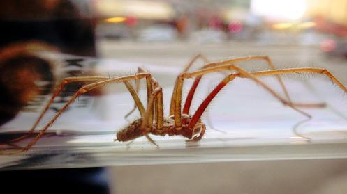 huge-spider-03