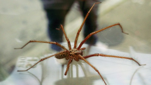 huge-spider-04