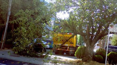 wm-truck-vs-tree-01