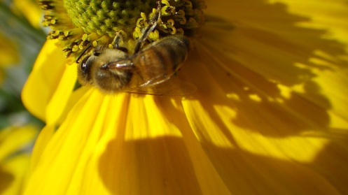 bees-flowers-03