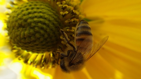 bees-flowers-04