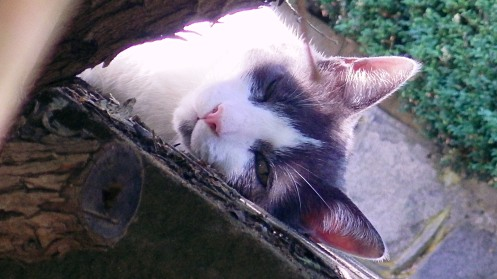 pretty-sleepy-cat-03-alt
