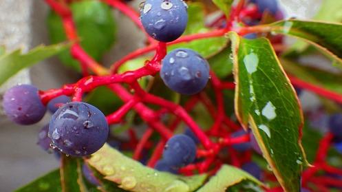 brightly-coloured-bird-berries-01