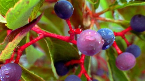 brightly-coloured-bird-berries-03