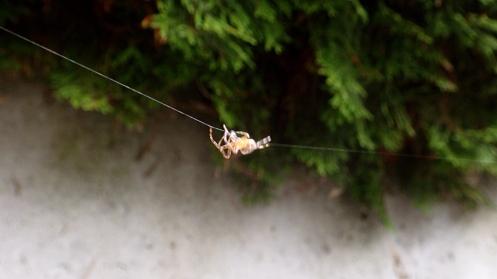 overachieving-arachnid-01
