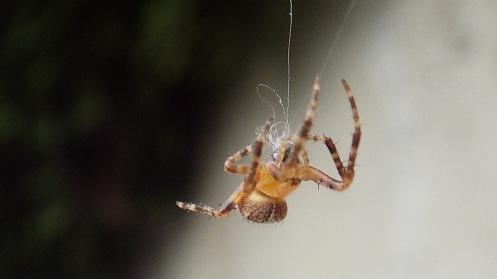 overachieving-arachnid-02