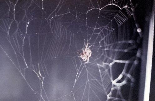 Arabella's first web aboard Skylab 3. -- NASA, JSC-SL3-110-1452