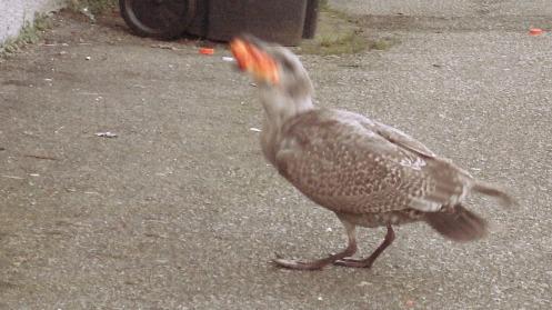 baby-gull-breadroll-02