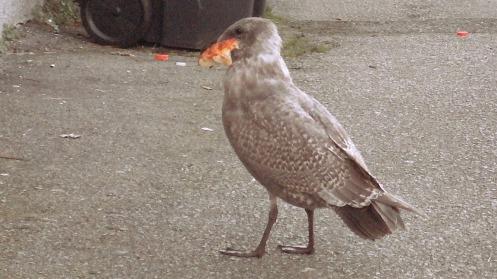 baby-gull-breadroll-04
