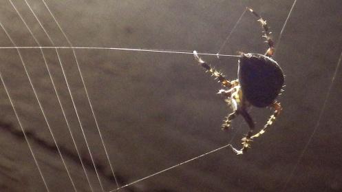 spider-spinning-01