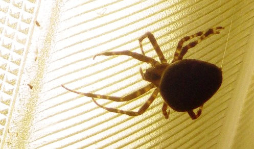 spider-spinning-02