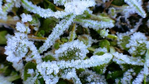 11-30-2015-02-frosty-grass