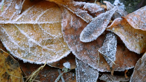 frosted-leaves-01